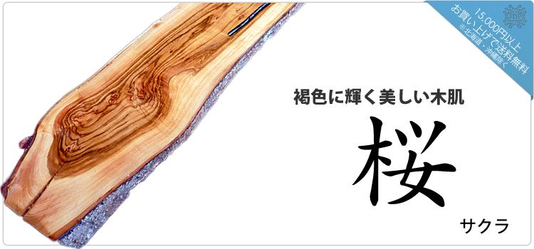 山桜/サクラ「褐色に輝く美しい木肌」